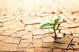 resilienciaa