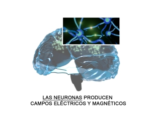 neuronas-celulas-excitables